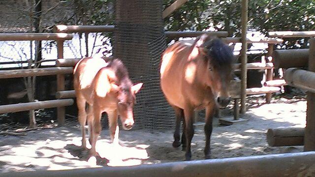 お馬の親子は...@上野動物園